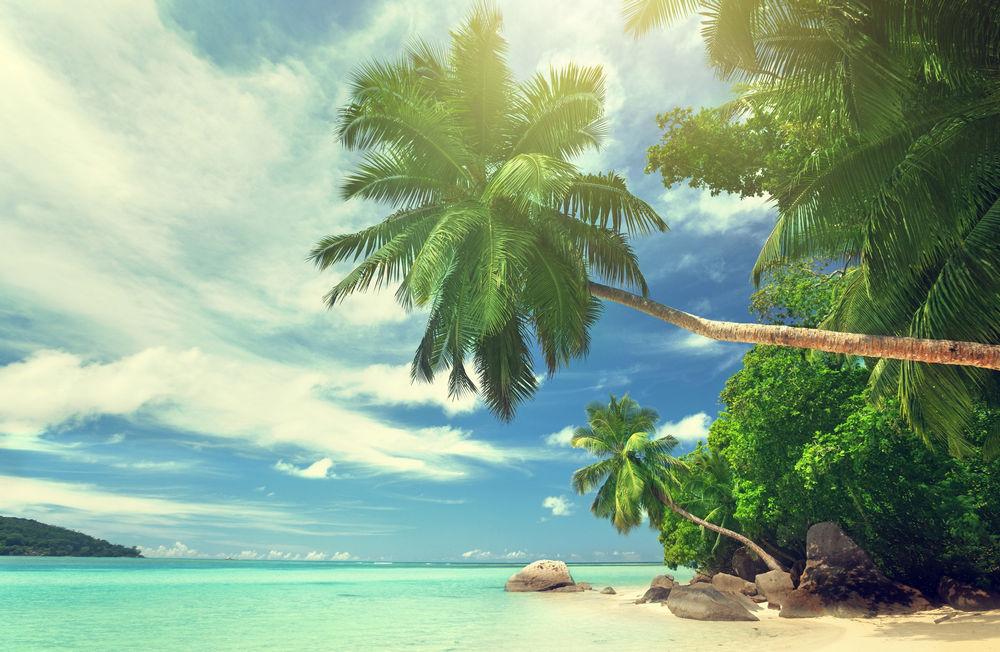 景观,水,热带,棕榈树,海滩448664