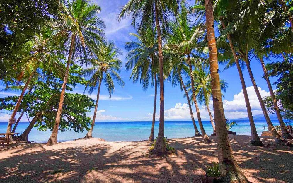 摄影,景观,棕榈树,海滩,热带,海,阳光,阴影,菲律宾421393