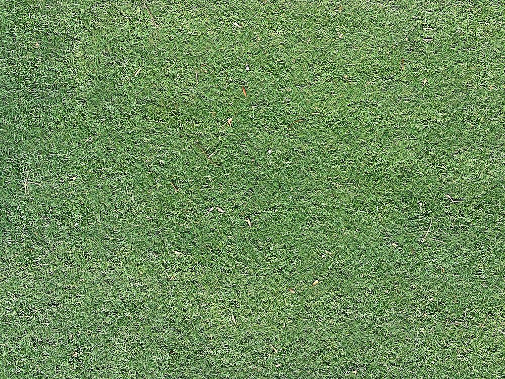 绿色草地台湾草草坪材质装饰背景